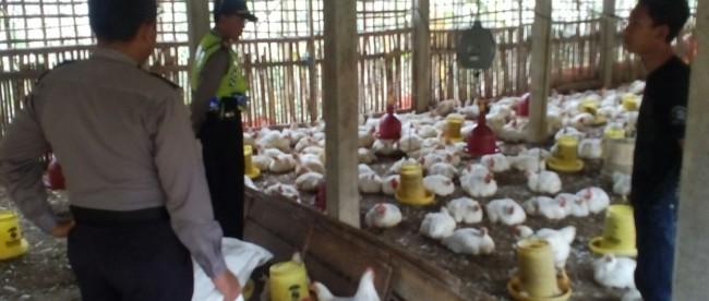 Memberikan Pesan Kamtibmas sampai ke Kandang Ayam