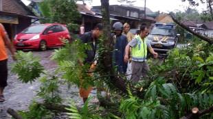 Pohon Rubuh menutup jalan, Kapolsek bersama anggota bersihkan pohon