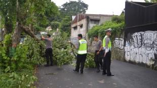 Pohon Tumbang di Jl. R. Sumendro