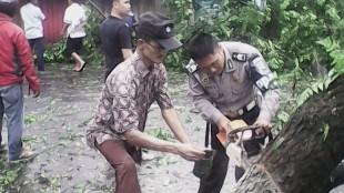 Pemotongan Pohon Yang Tumbang