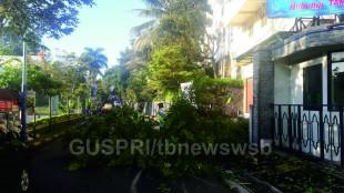 Dahan Pohon Ayoman di Jl. Kyai Muntang Roboh dan Tutup Akses Jalan